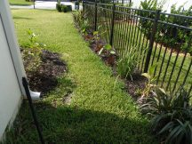 newly planted - side between neighbor - left