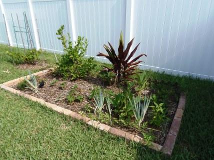 green onions, garlic, strawberries, key lime and ti plant