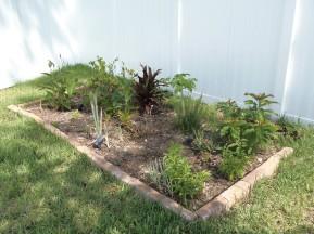 Back left 2016 peppers, garlic, ti plant, rosemary, canna's, meyer lemon and avocado