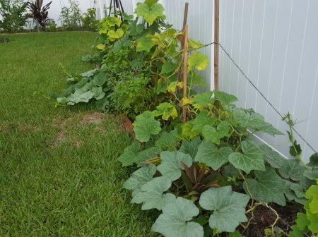 Butternut squash take over