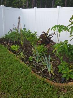 Back left 2017 - tomato teepee, ti plant, papaya, lemon tree. avocado and green onions towards the front