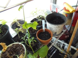 loofah sponge vine taking over