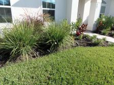 left side of walkway garden bed - again african iris, fire cracker grass