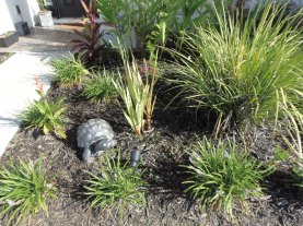 my adorable concrete turtle that I painted nestled between the liriope and what's left of the glad's