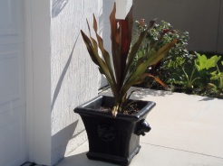 lion concrete planter that I finally was able to find- custom painted - with a spider lily