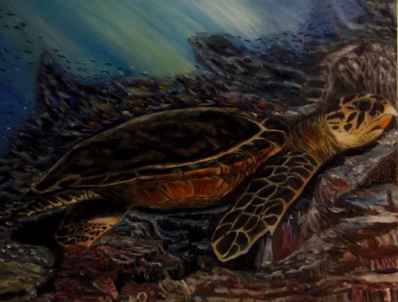Hawksbill Turtle